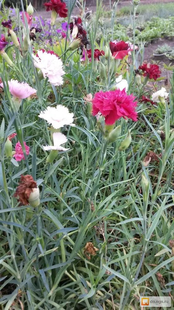В омске рассада цветов 47