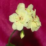 Комнатные растения и цветы, Омск