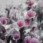 3Д фотообои с цветами, Омск