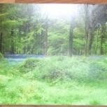 "Фотопанорама ""лес"": длина 2,78 метра, ширина 0,76 метра, Омск"