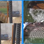 Преобразователь ржавчины, Омск