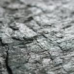 Каменный шпон, Омск