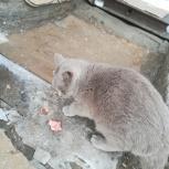 Милая кошечка ищет дом, Омск