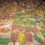 Тюльпаны оптом, хранение бесплатно, Омск