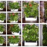 Красивый бизнес gardenwall, доступен каждому (ищем представителей), Омск
