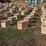 Пчёлы. Пчелопакеты, Омск