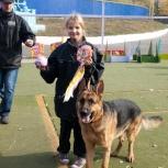 дрессировка собак в Омске, Омск