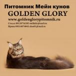 Продаются котята мейн кун из профессионального питомника,с документами, Омск