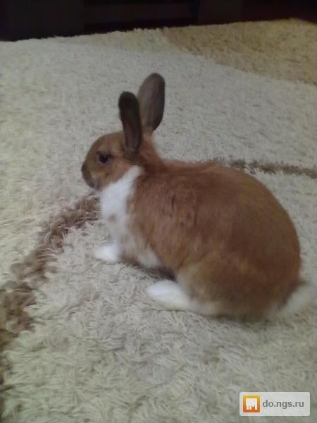 Подать объявление отдам кроликов в хорошие руки дать объявление бесплатно на продажу недвижимости на юге